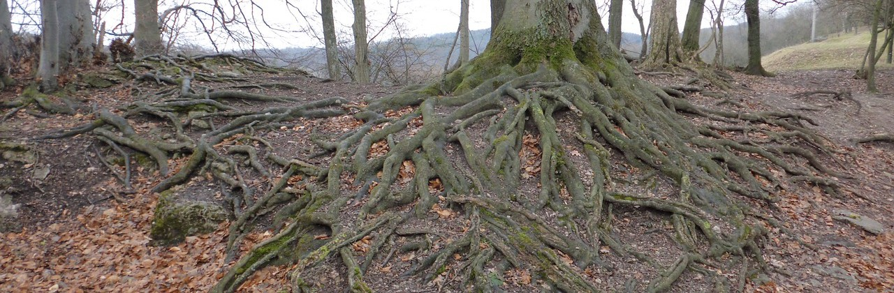 The (Plumbing) Trouble With Trees