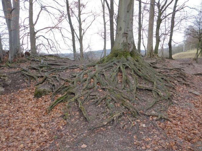 tree root plumbing emergency