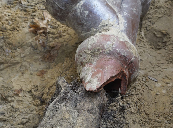 How To Identify and Repair Tree Root Damage in Your Pipes